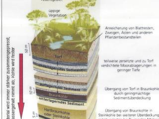 Biogene Sedimente_Bild